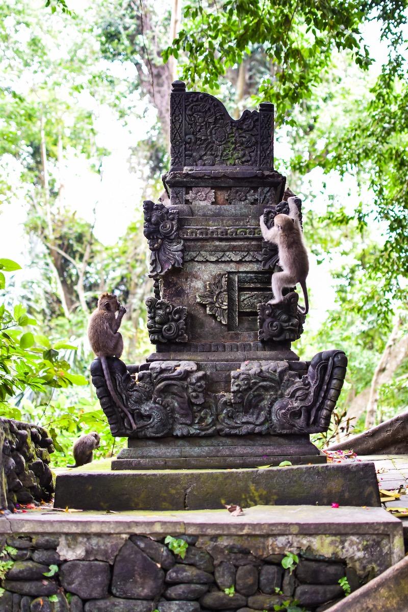 Ubud Monkey Forest Sanctuary in Bali, Indonesia
